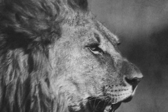 Animal is Fashion: l'Africa di Hietala alla MFW