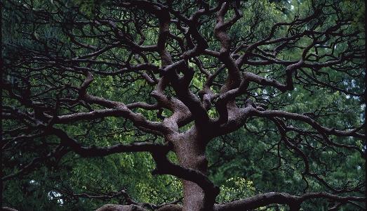 L'arte degli alberi alla Fondazione Cartier di Parigi