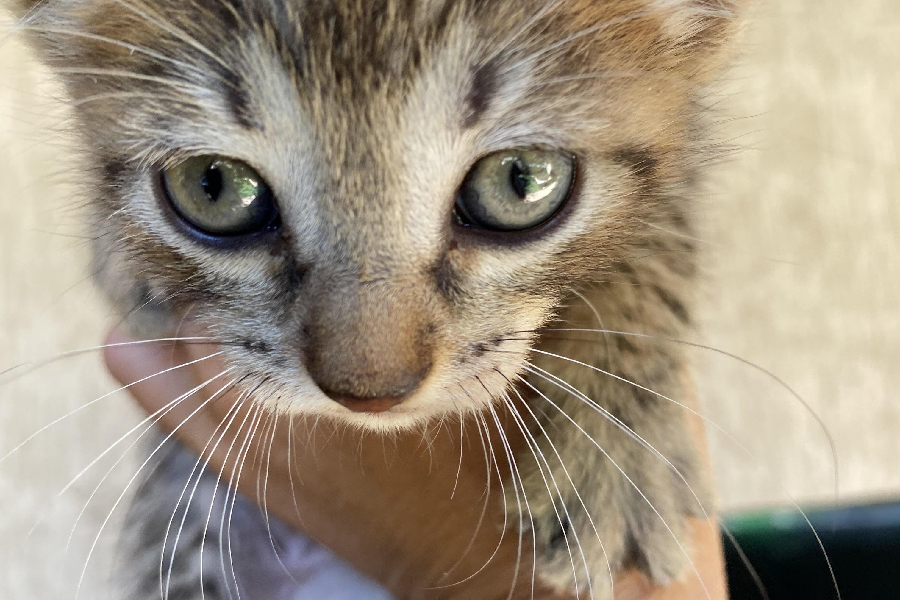 Le avventure di Itaca il gatto
